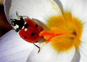 Gartenarbeit Im Februar : das sollten sie jetzt bei arbeiten im garten beachten ~ Frokenaadalensverden.com Haus und Dekorationen