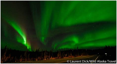 alaska northern lights tour wild alaska travel alaska polar bear northern lights