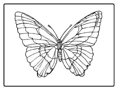 printable butterfly outline coloring pages  gclipartcom