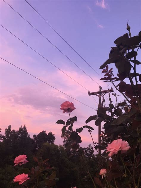 aesthetic flower photography aesthetics   sky