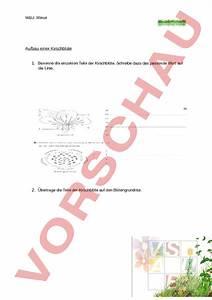Aufbau Einer Kirschblüte : biologie pflanzen botanik aufbau einer kirschbl te ~ Frokenaadalensverden.com Haus und Dekorationen