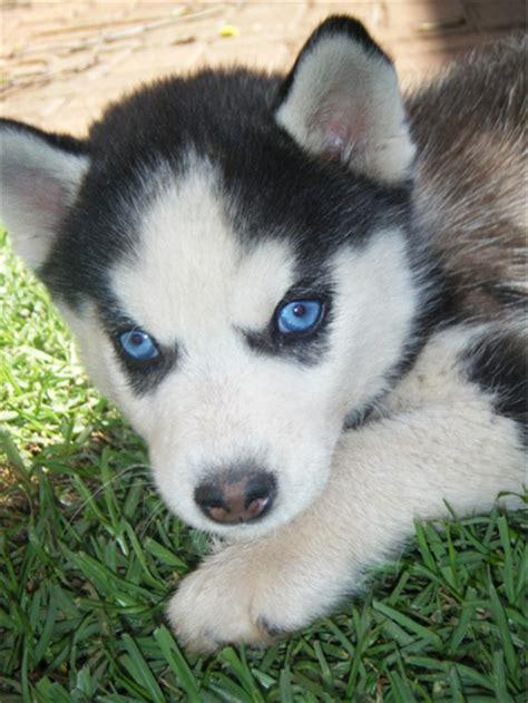 Husky Girl Puppy Names