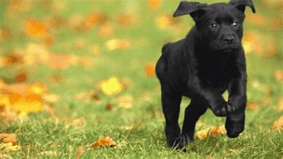 Puppies Kittens Streaming Cutest Guide Decider America