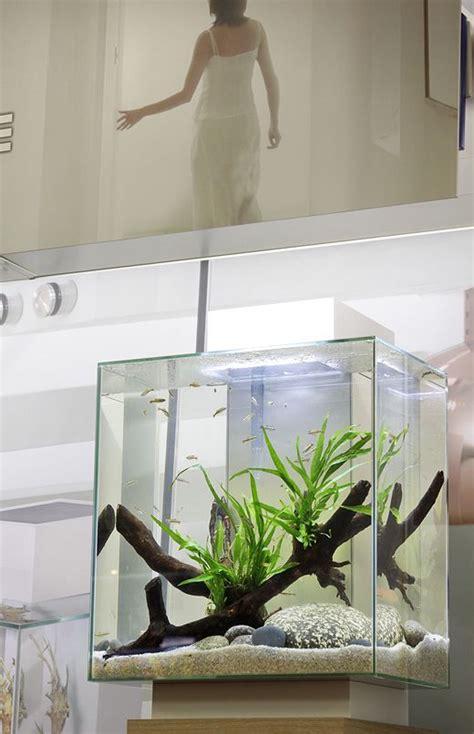 fluval aquascape fluval edge aquarium nanotank aquascape by george