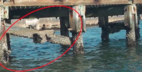 pier pete fishing beach 11th closed avenue damage