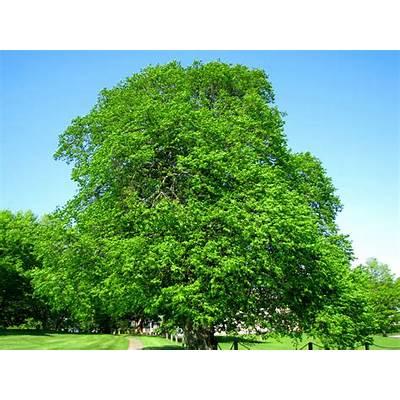 daily meditations: beautiful trees!