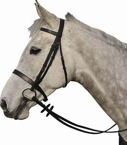 Diagram Of Horse Halter, Diagram, Get Free Image About ...
