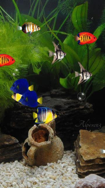 Animated Fish Aquarium Wallpaper Mobile - animated aquarium screensaver mobile screensavers