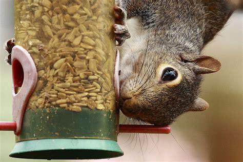 easy tips   squirrel proof bird feeder