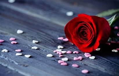 Rose Background Flower Romance Screen Wallpapers Heart