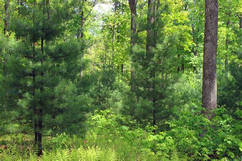 picture wood nature tree leaf landscape summer