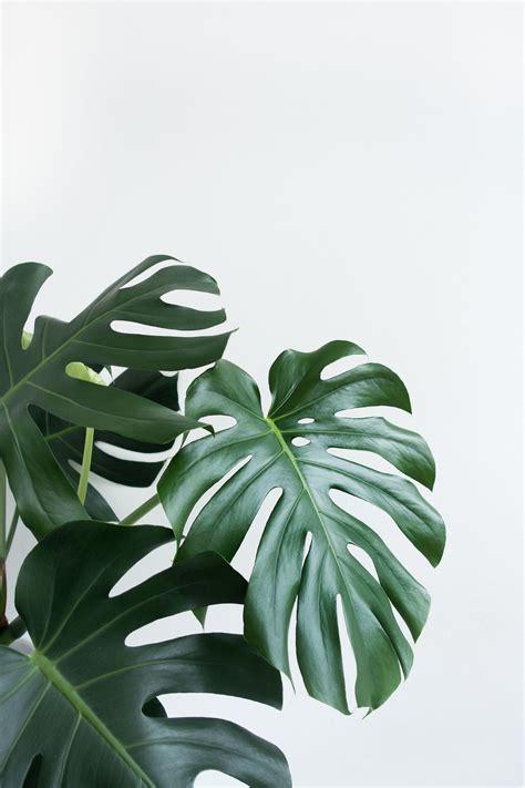 pin oleh grace  illu  gambar tanaman hijau