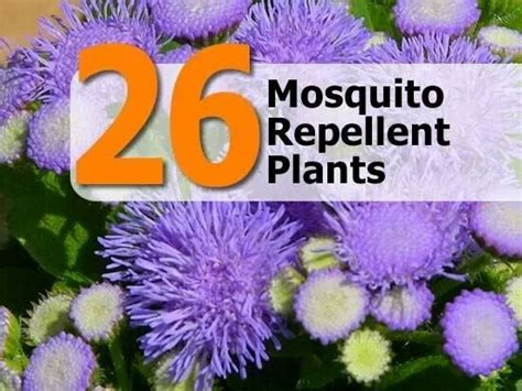 anti mosquito plants 30 best railroad ties images on pinterest backyard ideas railroad ties landscaping and