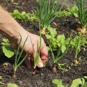 Garten Pflanzen August Gemüse by Welche Pflanzen Wohin Im Garten