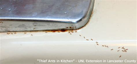 ant control nebraska extension in lancaster county