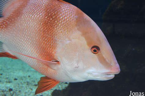 les zoos dans le monde aquarium du conseil g 233 n 233 ral des bouches du rh 244 ne
