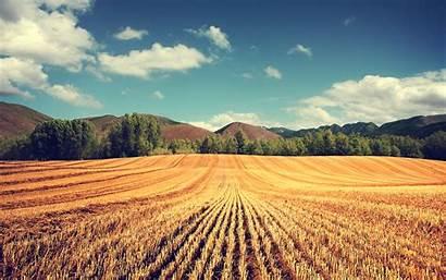 Nature Summer Landscape Field Wheat Desktop Wallpapers