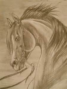 Horse Drawings Beautiful Sketches