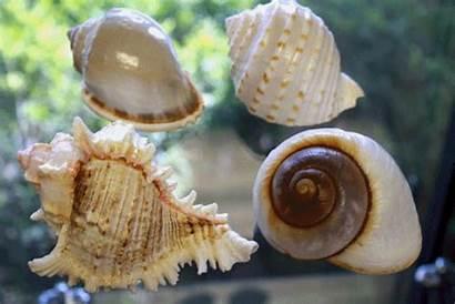 Shell Animated Gifer