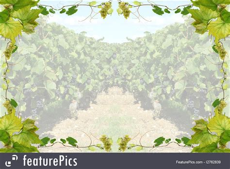 templates wine border stock illustration