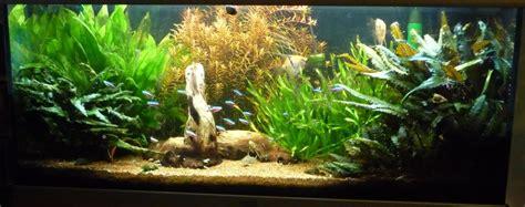 aquarium amazonien 180 par benben92