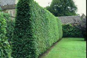 Fast Growing Privacy Hedge Plants