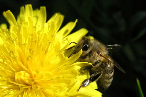 Bienen Partner bienen und partner balkon bienen sollen bienensterben einhalt