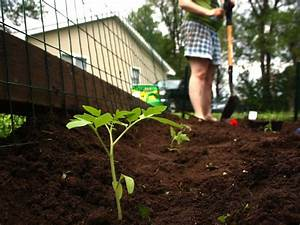 Planter Des Graines De Tomates : quand planter tomates pleine terre ~ Dailycaller-alerts.com Idées de Décoration