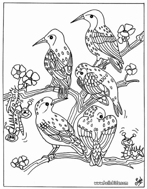 bird group coloring pages hellokidscom