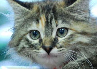 Houston Humane Society Pet Rescue Pet Adoption
