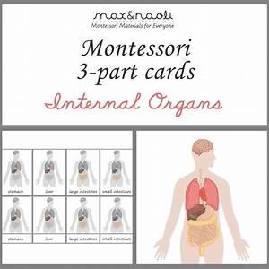 Best 25+ Montessori science ideas on Pinterest ...