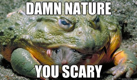 Damn Nature You Scary Meme - image 456044 damn nature you scary know your meme