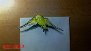 Budgie - 3d Drawing