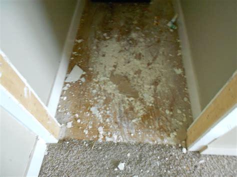 asbestos inspection asbestos testing mill creek