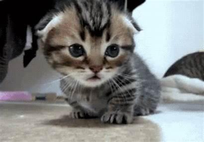 Kitten Gifs Adorable Want Shy Internet Never