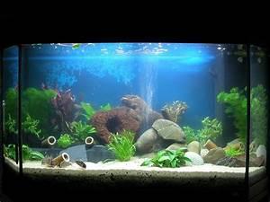 Aquarium 120l Mit Unterschrank : bis 200l erstbesatz 120l aquarium forum ~ Frokenaadalensverden.com Haus und Dekorationen