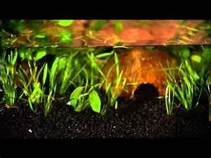 Wie Entferne Ich Klebereste : wie richte ich ein aquarium ein youtube ~ Eleganceandgraceweddings.com Haus und Dekorationen