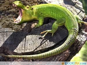 Photoshopped Animal Hybrids
