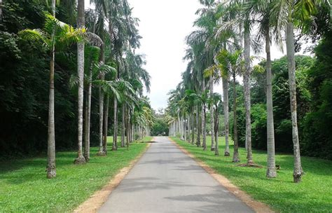 addstore business directory gampaha botanical garden