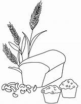 Wheat Coloring Pages Bread Grains Printable Muffin Grain Whole Pasta Macaroni Clipart Drawing Colouring Template Breads Kindergarten Nutrition Drawings Loaf sketch template