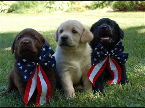 images  patriotic  pinterest happy