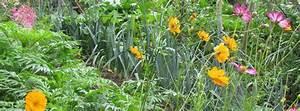 Plantes Amies Et Ennemies Au Potager : cr er un jardin en permaculture plan ~ Melissatoandfro.com Idées de Décoration