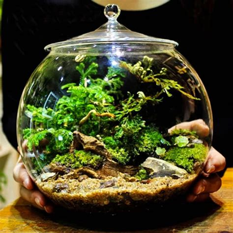 glass terrarium container bell jars with cover medium