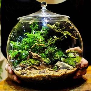 Bocaux en verre Terrarium contenant Bell avec couverture