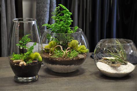 terrarium plants tara mchugh flora terrariums