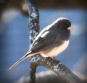Minnesota Winter Birds Identification