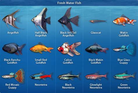 beginner aquarium fish fish popular culture