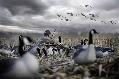 Waterfowl Drake Hunting