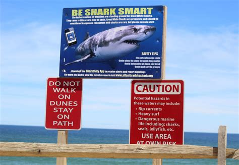where on cape cod can you purchase a mini christmas tree all decorated with lights callboxes and hemorrhage kits what outer cape cod towns are buying to address shark safety