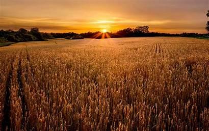 Field Sunset Wallpapers Lovely Feld Wide